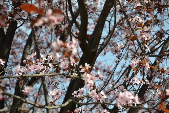 Baharda Açan çiçekler Fotoğraf Hicran öztürk