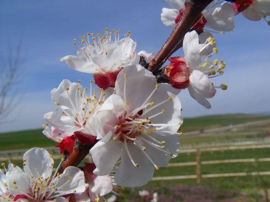 Ağaç çiçeği rüyası yorumu