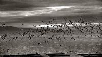 Uçun Özgürlüğe