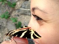 Kelebek Ve Gözler
