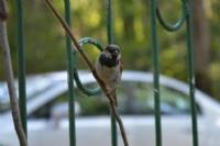 Meraklı Kuş