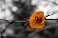 Sarı Çiçeğim