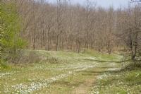 Sefaalını Ormanından Bir Kesit