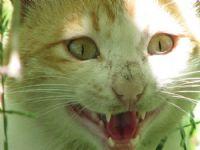 Minik Kedi Kükredi...