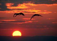 Uçan Balerinler (5)