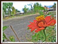 Musalla Taşının Önünde Acizane Bir Çiçek...