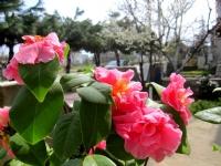 Baharda Güller, Denizli