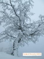 Kış Günü