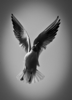 Zarif Uçuş
