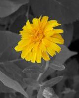 Sarışın