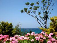 Kıbrıs'tan