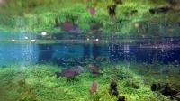 Sarıkızın Balıkları