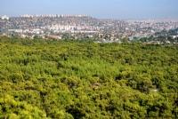 Antalya Ve Yeşil Ormanları