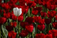 Kırmızı Beyaz