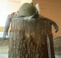 Maymun Yorgun