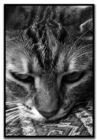 Sakine Kedi