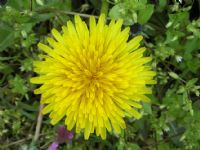 Sarışınsın Sarısın Güzel