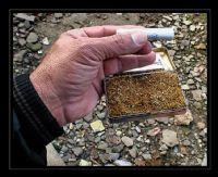 Tütün