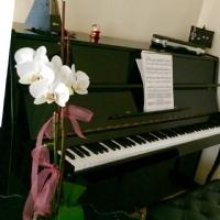 Orkidem Çiçek Açtı