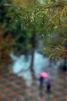 Yağmur.
