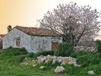 Eski Bağ Evi Ve Bahar