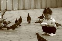 Kuş Yemcileri_8