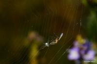 """Miniciks Hayatlar """" Örümcek Ağı"""""""