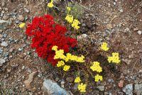 Sarı Ve Kırmızı