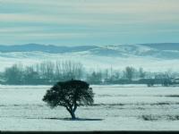 Kış...