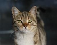 Sokaktan Bir Kedi..