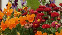 Yağmur Sonrası Çiçekler