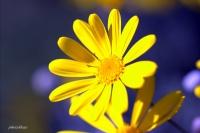 Çiçek,baharın Gelişi