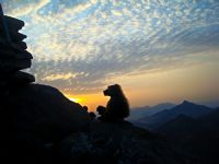 Romantik Maymun:)