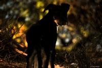Köpekle Selamlaşma