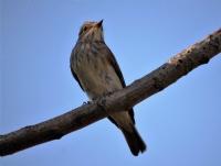 Sinek Kuşu 2