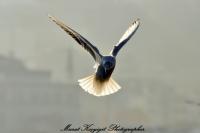 Hayat Kısa Ve Kuşlar Uçuyor.