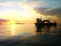 Balıkçı Tekseni Ve Batan Güneş