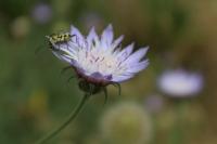 Bahar Ve Böcek