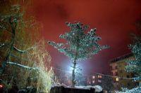 Parkta Ki Ağaç