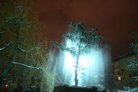 Parkta Ki Ağacın Şovu