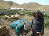 Çobanın Sürüsü