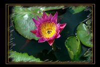 Çiçek11