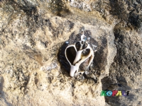 Denizin Kalbi