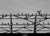 ... ::: Kuşlar ::: ...
