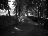 Sonbahar Ve Ağaçlı Yol