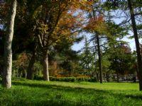 Yeşillik Ve Temiz Hava