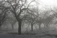 Sis Ve Kayısı Ağaçları