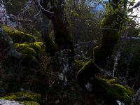 Yosun Cenneti