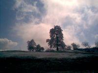 Ağaç Kışı Giyerken Üzerine