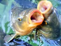 Balıklı Göl - Kalirrhoe